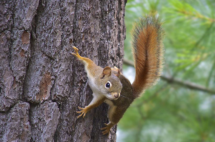 10 Squirrel Symbolism Facts & Meaning: A Totem, Spirit