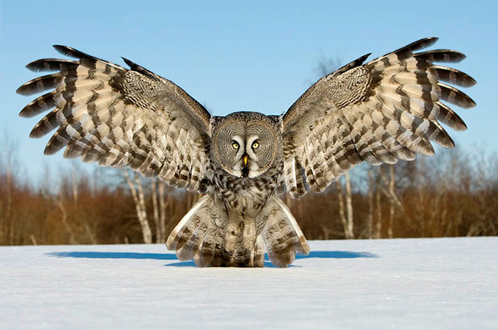10 Owl Symbolism Facts Meaning A Totem Spirit Power