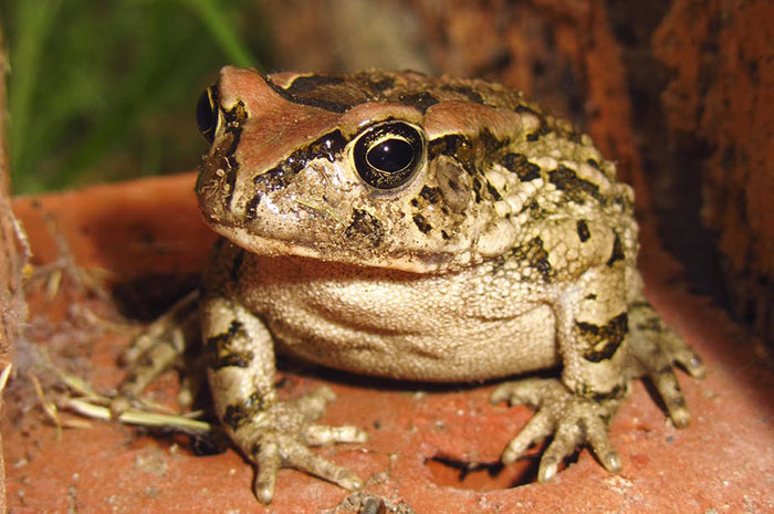 10 Frog Symbolism Facts & Meaning: A Totem, Spirit & Power