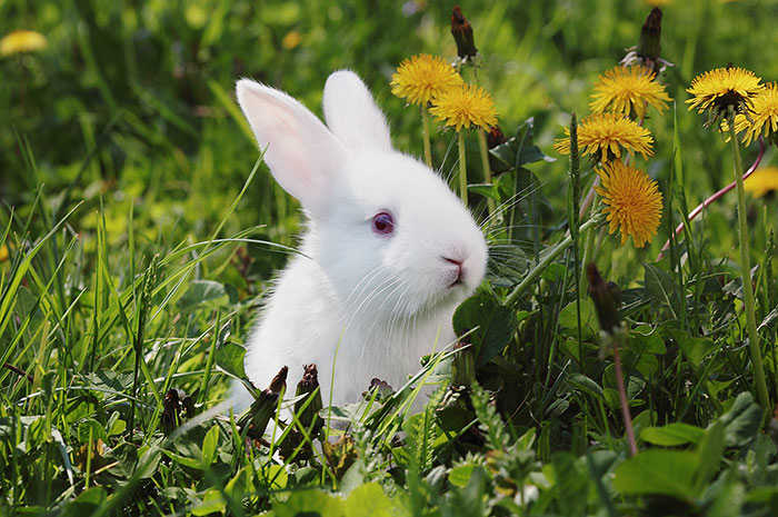 10 Rabbit Symbolism Facts & Meaning: A Totem, Spirit & Power